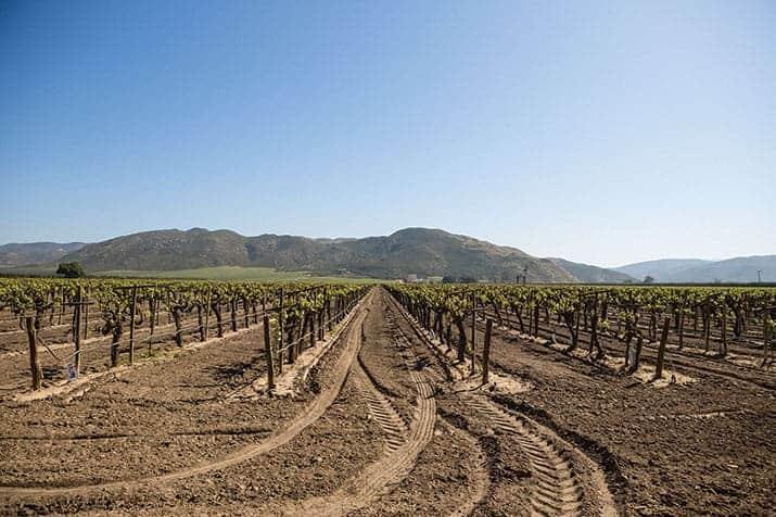 vino mexicano valle de guadalupe, la cetto 3