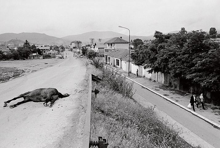 PJ Harvey libro Int1